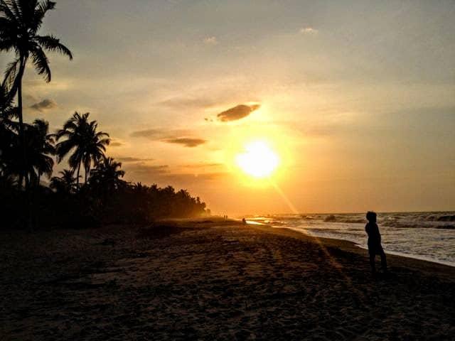 sunset_palomino