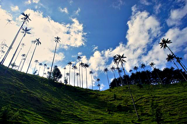 Valle de Cocora near Salento in Quindio