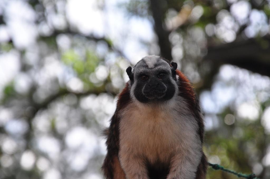 monkey_valle_de_anton