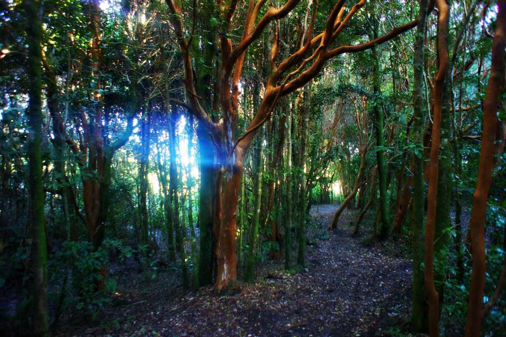 National park Chiloe