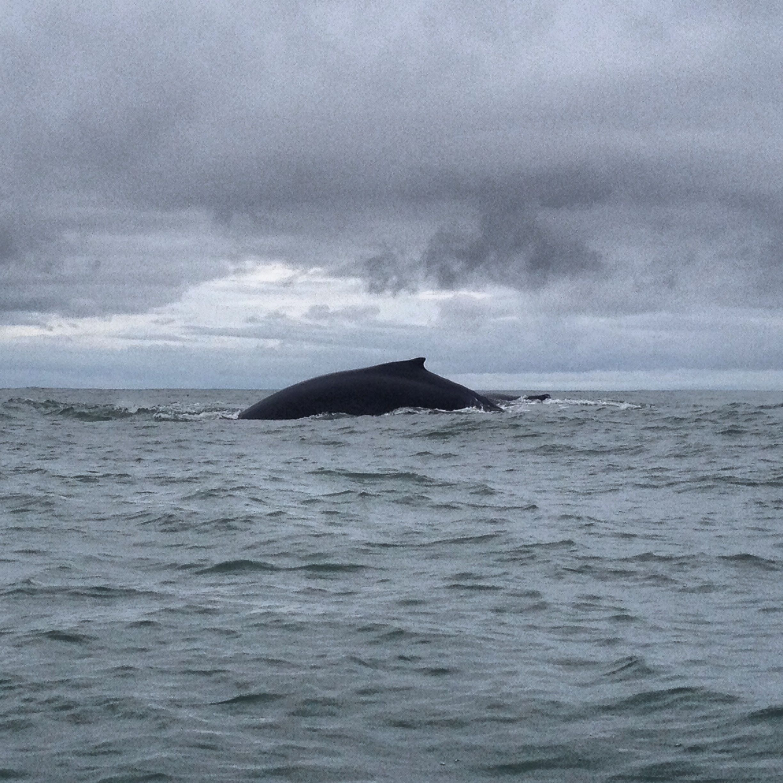 Whale watching – Nuqui (Chocó)